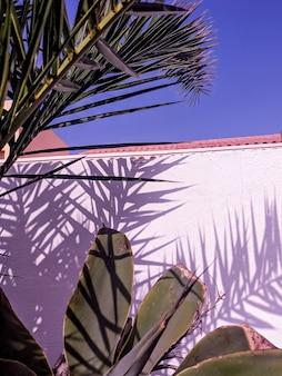 Viaje. isla canario. vibraciones de la moda tropical de palmeras