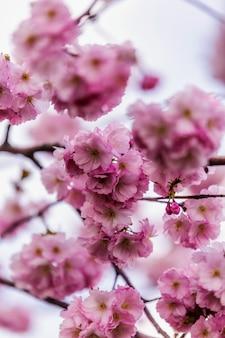 Viaje de primavera de sochi
