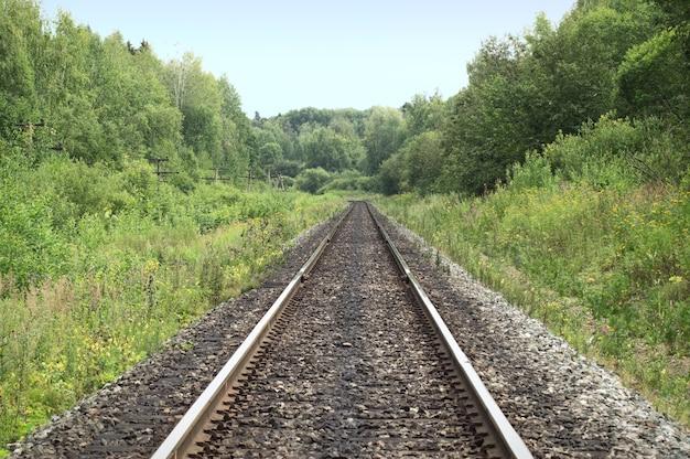 Vías de ferrocarril pasando por el bosque.