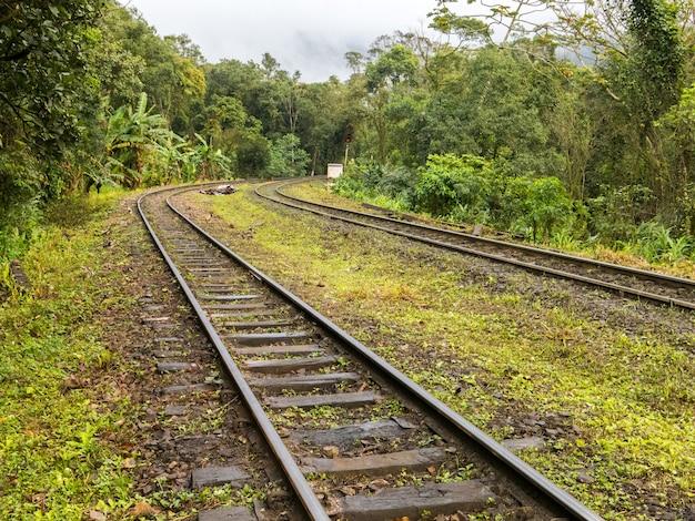 Vías de tren en la selva brasileña
