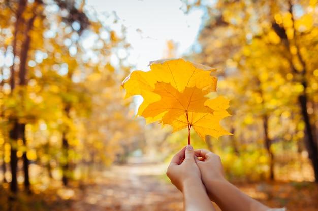 Vibraciones otoñales. mujer que sostiene las hojas de arce en el parque otoño