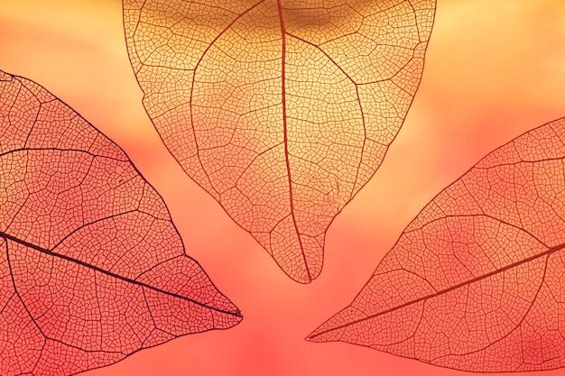 Vibrantes hojas de otoño naranjas transparentes