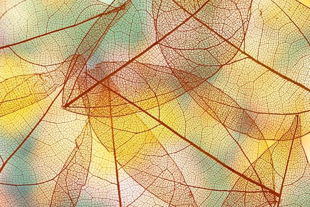 Vibrantes hojas de otoño transparentes