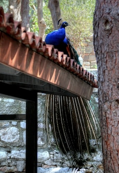 Vida en la calle en el destino de vacaciones de turquía bodrum en un día soleado