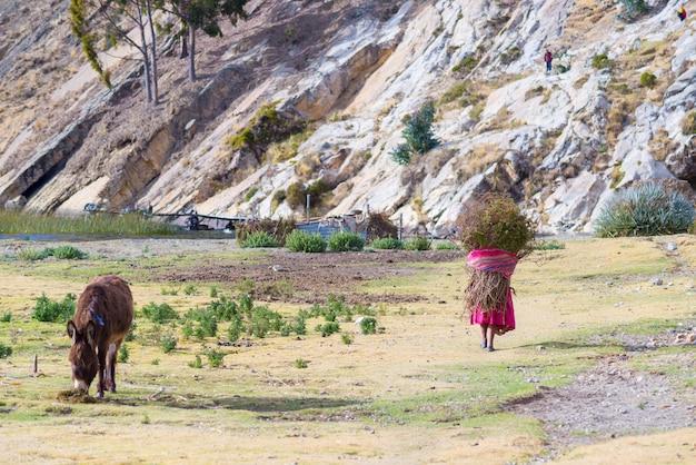 Vida rural en la isla del sol, lago titicaca, bolivia