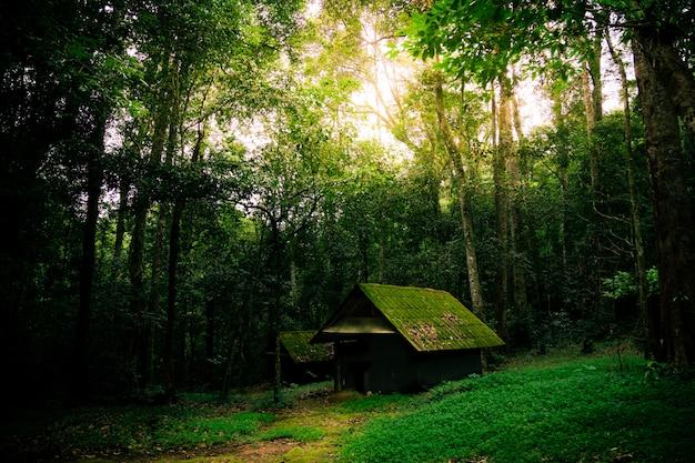 Vieja cabaña en la naturaleza