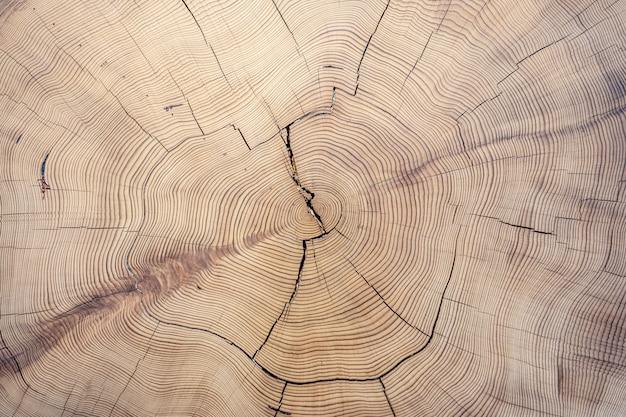 Vieja textura de madera cortada