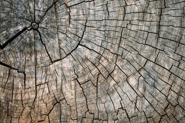 Vieja textura de tocón de árbol agrietado