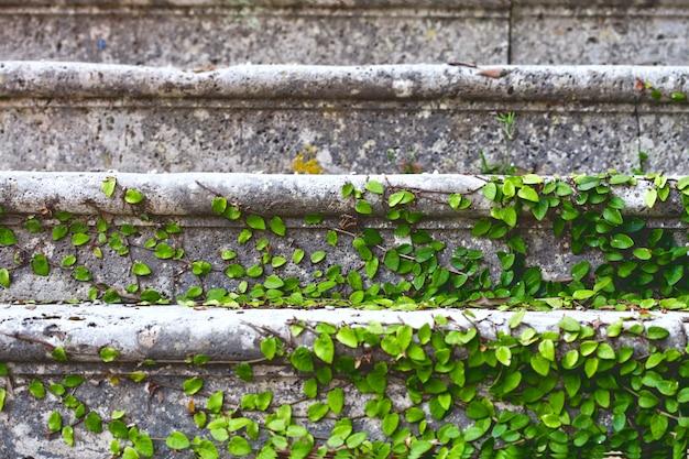 Viejas escaleras en el parque