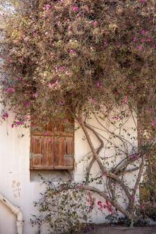 Un viejo árbol de flores secas teje a lo largo de la pared de la fachada de una casa con una puerta de madera