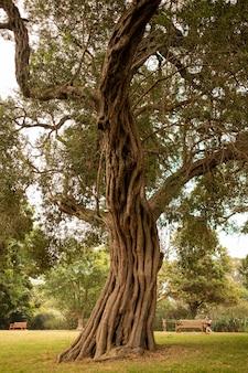 Viejo árbol en el jardín botánico de sydney bajo la luz del sol durante el día