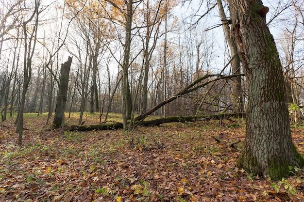 Viejo bosque en la temporada de otoño