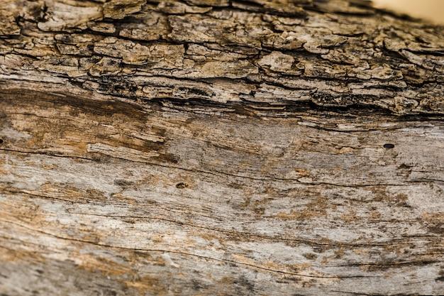 Viejo fondo de tronco de árbol con textura