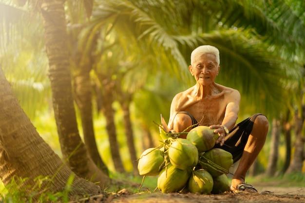 Viejo hombre que recoge el coco en granja del coco en tailandia.