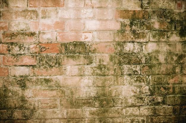 Viejo muro de ladrillo con liquen
