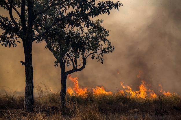 Viento que sopla en un árbol llameante durante un incendio forestal.