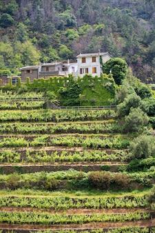 Villa con viñedos en terrazas, italia