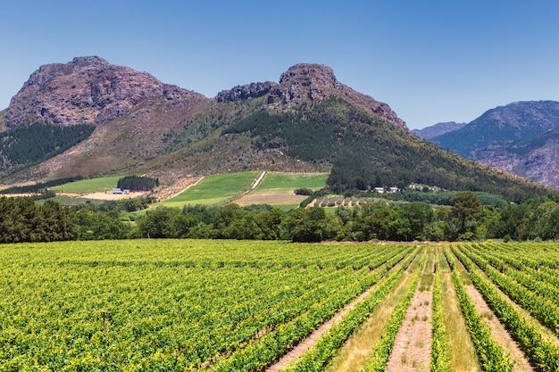 Viñedo y las montañas en la ciudad de franschhoek en sudáfrica