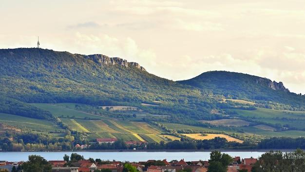 Viñedos al atardecer en la cosecha de otoño. uvas maduras. región del vino, moravia del sur - república checa. v