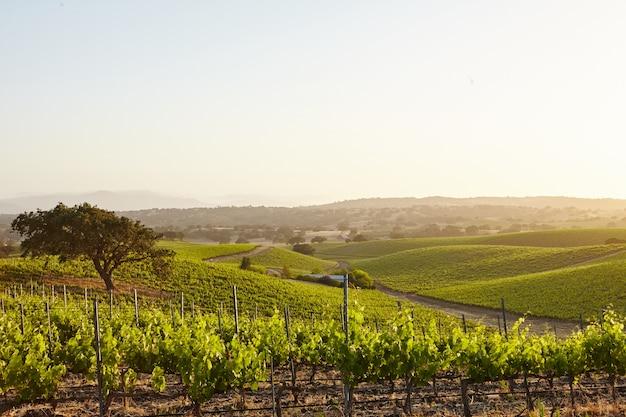 Viñedos de california en santa bárbara