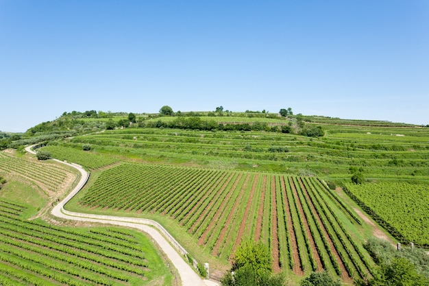 Viñedos de soave, famosa zona vinícola.