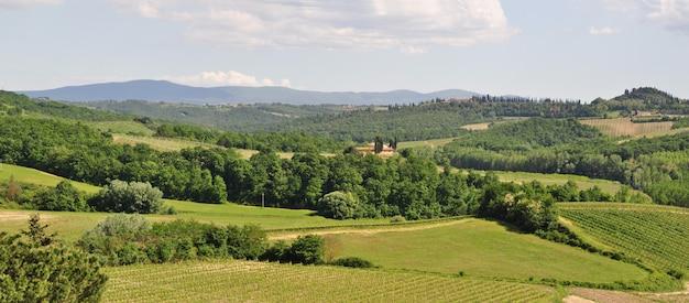 Viñedos toscanos en verdes colinas en verano