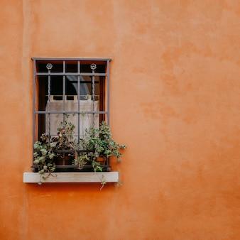 Vintage ventana con rejilla y plantas en macetas en el fondo de la pared naranja