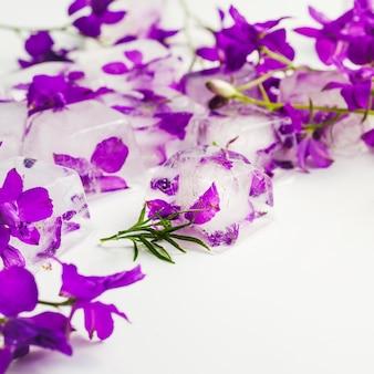 Violetas en cubos de hielo.