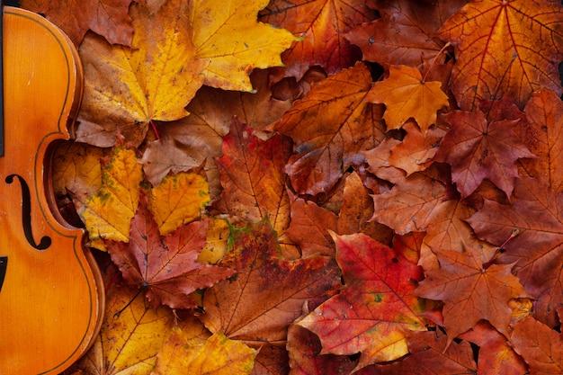 Violín viejo en fondo amarillo de hojas de arce del otoño.