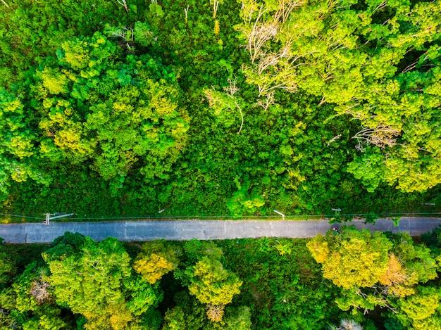 Vista aérea de árbol en el bosque con carretera