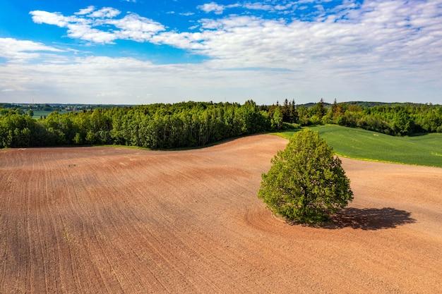Vista aérea de un árbol en medio de un campo agrícola cultivado en el borde de un bosque, campo con orugas de tractor, concepto de industria agraria