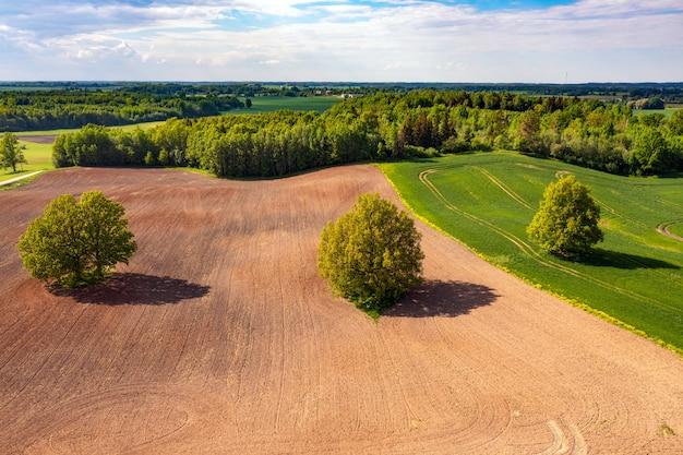 Vista aérea de árboles en medio de un campo agrícola cultivado en el borde de un bosque, campo con orugas de tractor, concepto de industria agraria