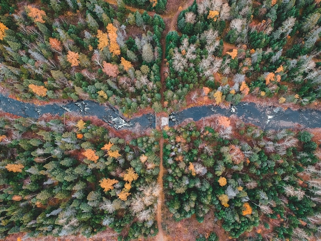 Vista aérea de árboles en otoño