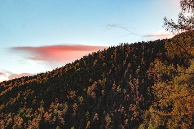 Vista aérea del bosque durante el atardecer