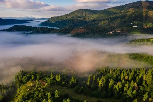 Vista aérea del bosque envuelto en niebla matutina