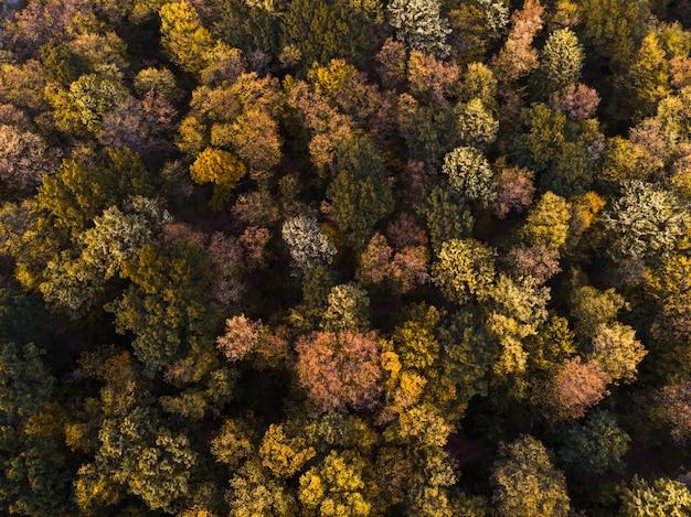 Vista aérea del bosque de otoño