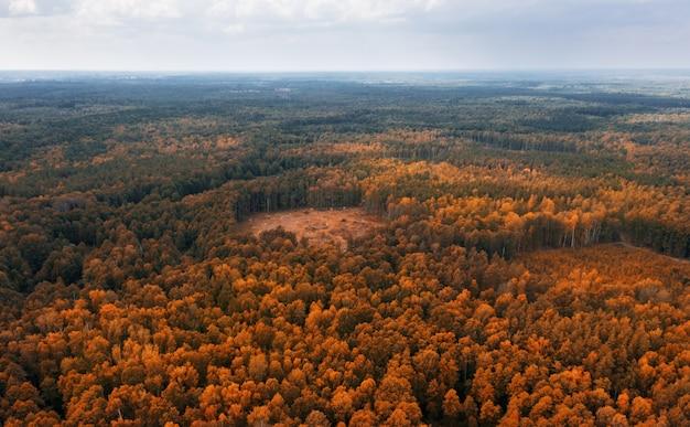 Vista aérea del bosque de otoño.