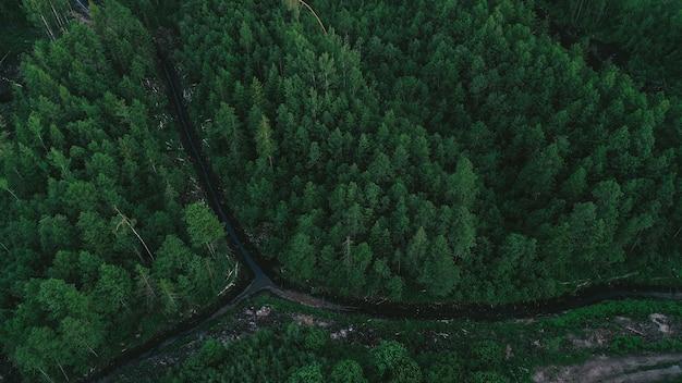 Vista aérea del bosque verde