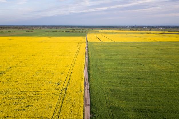 Vista aérea del camino de tierra recta en campos verdes y amarillos con plantas de colza en flor en primavera soleada o día de verano. fotografía de drones.