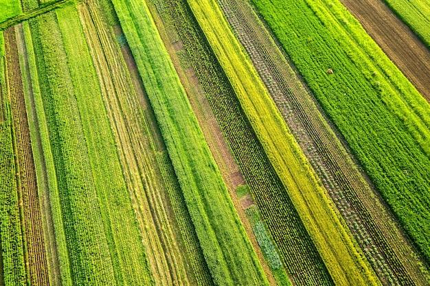 Vista aérea de campos agrícolas verdes en primavera con vegetación fresca después de la temporada de siembra en un día cálido y soleado.