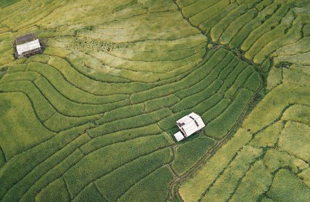 Vista aérea de los campos de arroz naturales para el cultivo, terraza del campo de arroz en la montaña
