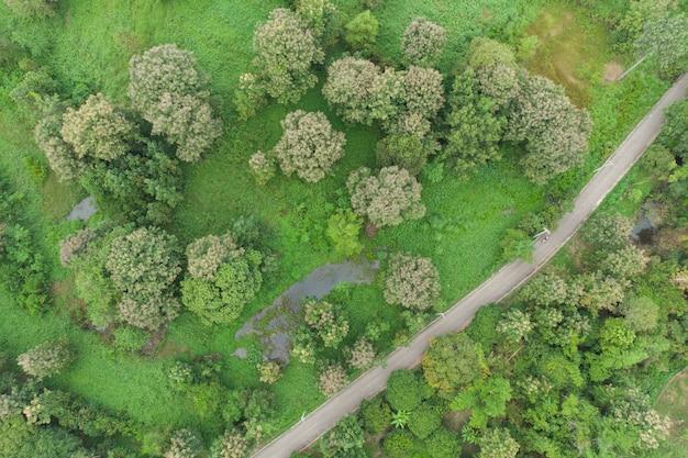Vista aérea de la carretera pasando el bosque.
