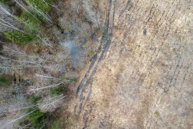 Vista aérea de un denso bosque con árboles desnudos de invierno y hojas caídas en el suelo