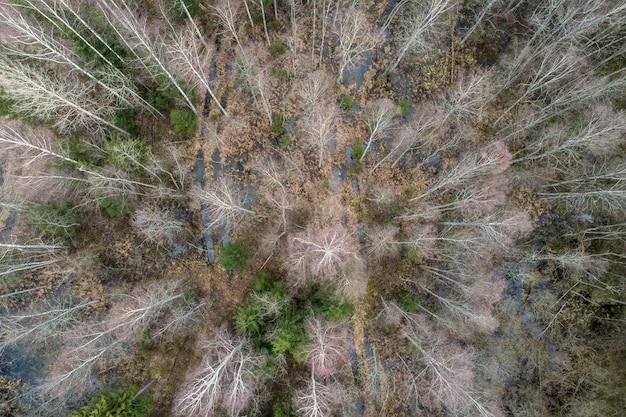 Vista aérea de un denso bosque con árboles desnudos en otoño y hojas caídas sobre un suelo