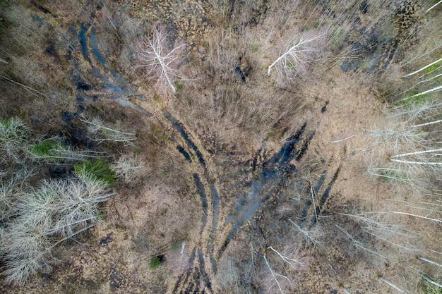 Vista aérea de un denso bosque con árboles desnudos de otoño y hojas caídas en un suelo