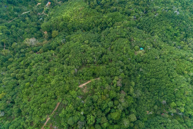 Vista aérea drone cámara vista superior selva árboles ecología con concepto de medio ambiente saludable y fondo de verano.