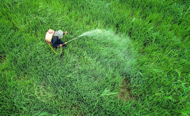 Vista aérea desde drone volando. granjero tailandés rociar productos químicos para el campo de arroz verde joven