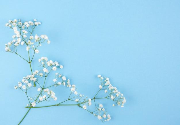 Vista aérea de flores de aliento de bebé sobre fondo coloreado