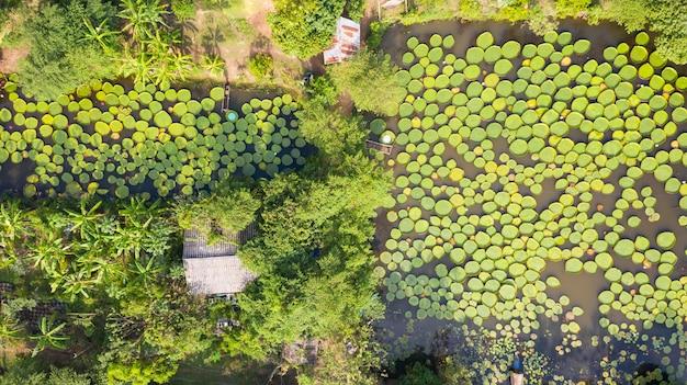 Vista aérea de la foto superior de los lirios de victoria