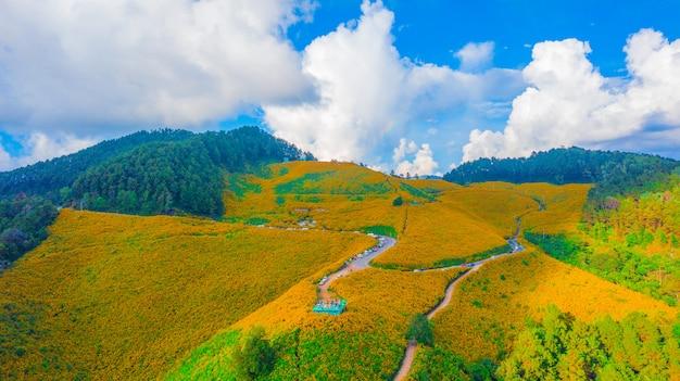 Vista aérea de girasoles mexicanos en las colinas de las montañas